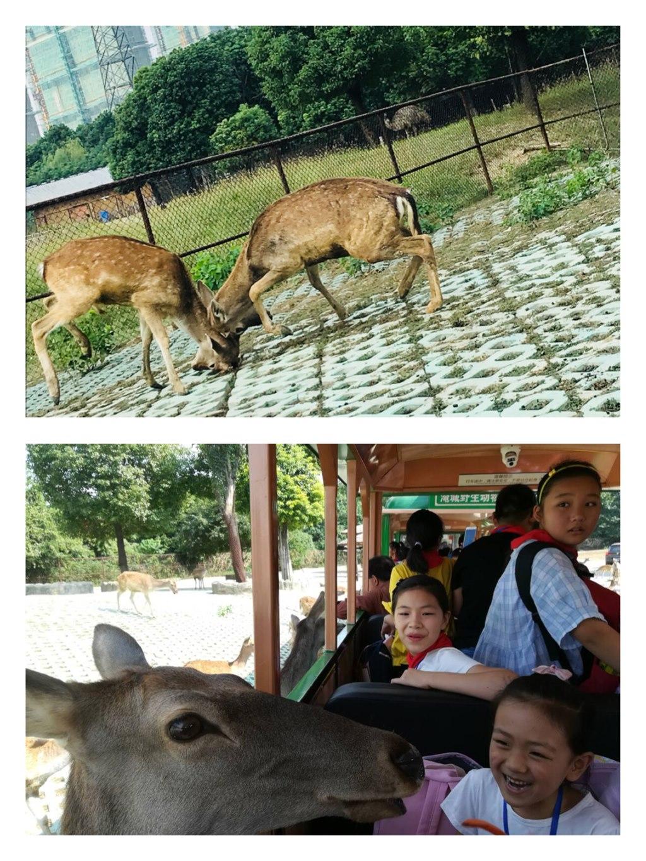 野生动物园的一日游,让孩子们走进了秋天,锻炼了身体,观察了动物,增进
